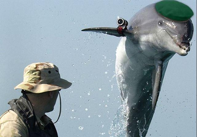 A military dolphin (illustrative). (photo credit:Wikimedia Commons,JPOST STAFF)
