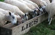 sheep-lies